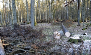 Artists ask Polish leaders to stop primeval forest logging