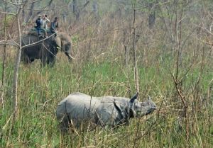 Rare one-horned rhino killed by poachers in Nepal