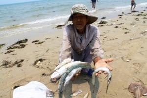 Vietnam environment official sacked over mass fish kill