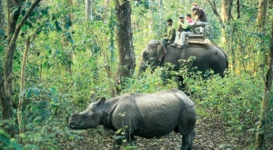 Chitwan National Park transfers 98 rhinos to Bardiya and Shuklaphanta