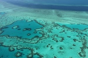 'Underwater wasteland' worries after cyclone hits Barrier Reef